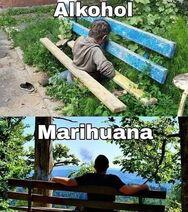 Alcohol versus marijuana. Alkohol versus marihuana