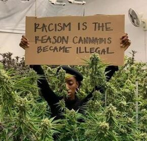 Racism is the reason cannabis became illegal