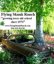 FlyingSkunkRanch