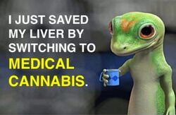 I just saved my liver by switching to medical cannabis
