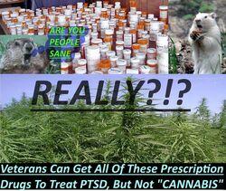 PTSD veterans. Cannabis. Pot versus pills