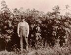 A Michigan hemp farmer standing with his crop in 1910