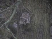 Little owl 27022010 1 small