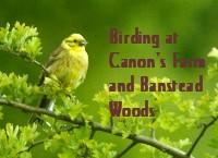 File:Canons avatar small.jpg
