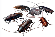 RE2Cockroaches