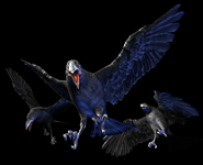 RE0 Crows