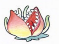 Pakupaku Flower