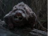 Rodachain Rat