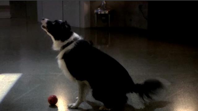 File:107 Caesar the Dog.jpg