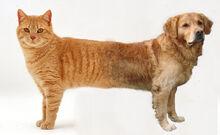 Catdog real
