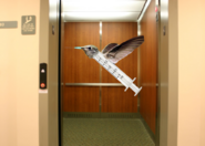 Needles are the hummingbirds of the elevator