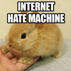 Bunny Internet