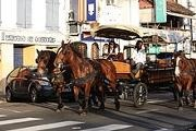 Martinique horse chariots