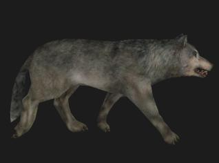 File:Animal wolf.jpg