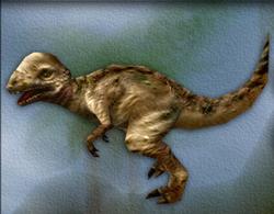 Carnivores Pachycephalosaurus
