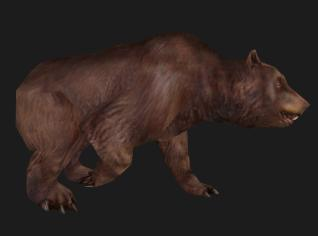 File:Animal bear.jpg
