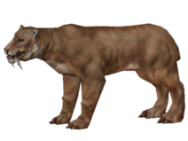 New smilodon
