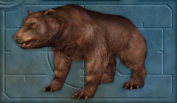Carnivores Ice Age Bear