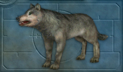 Carnivores Ice Age Wolf