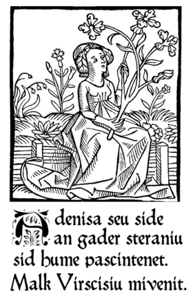 Adenis and Virsise 1512
