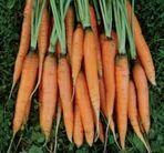 Carrot-scarlet-nantes-lg-215x201