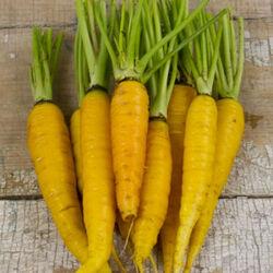 Amarillo-carrot-lg-400x400