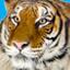 Tiger-Thumb