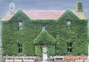 Casa cubierta de plantas