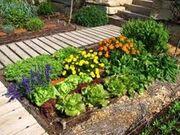 Jardin-ecologico