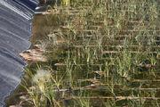 15-agosto-2011-14-50-44-las-plantas-que-se-comen-la-suciedad-se-emplean-cada-vez-mas-en-depuradoras detalle media-1-