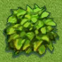 Green Shub