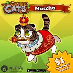 Maccha Charity