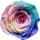 Rainbow rose mt