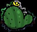 CCcactus