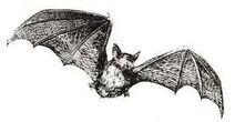 SOG Bat Familiar