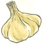 SQ Garlic