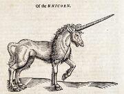Unicorn - 01