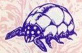 BR Cave Snail