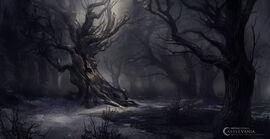 Danny-moll-csv-belmont-forest-keybg