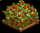 Strawberries 02