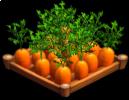 Carrots 02