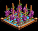 GrapesIrrigated 01