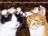 Пословицы про кошек