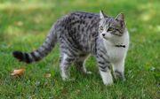 Кошак на улице