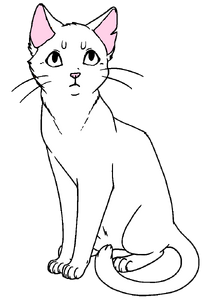 Манекен короткошёрстной кошки