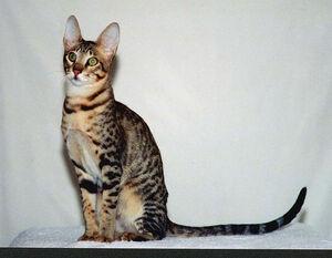 Serengetimalecat