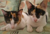 Calico with mum
