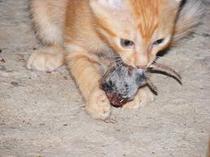 Kit eat
