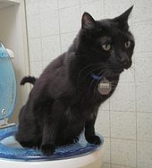 170px-Toilet Trained Cat 22 Aug 2005-1-