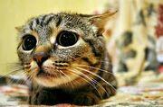 Cat hehe